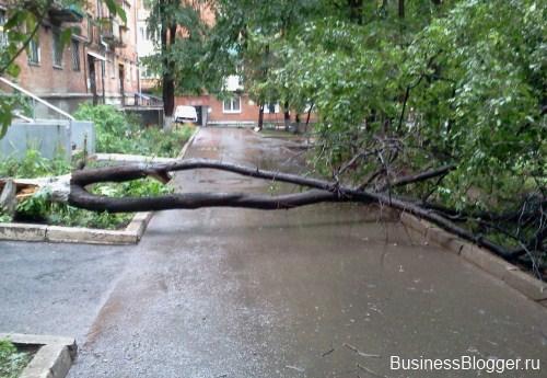 Сломанное от ветра дерево в Ижевске